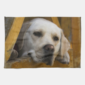 Blond Labrador retriever, Patagonia, Chile Tea Towels