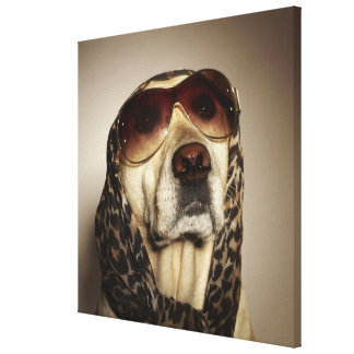 Blond Labrador Retriever wearing sun glasses Canvas Print