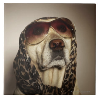 Blond Labrador Retriever wearing sun glasses Tile
