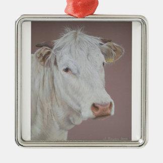 Blonde D'Aquitaine Cow Silver-Colored Square Decoration
