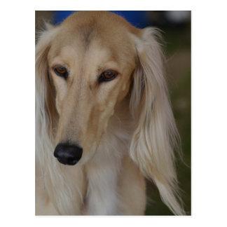 Blonde Saluki Dog Postcard