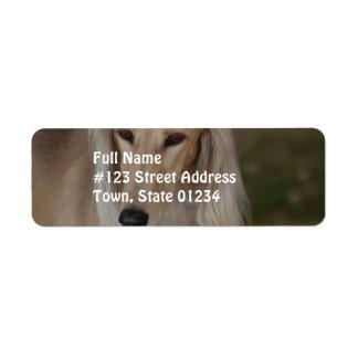 Blonde Saluki Dog Return Address Label