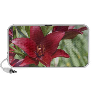 Blood Red Daylily Travelling Speaker