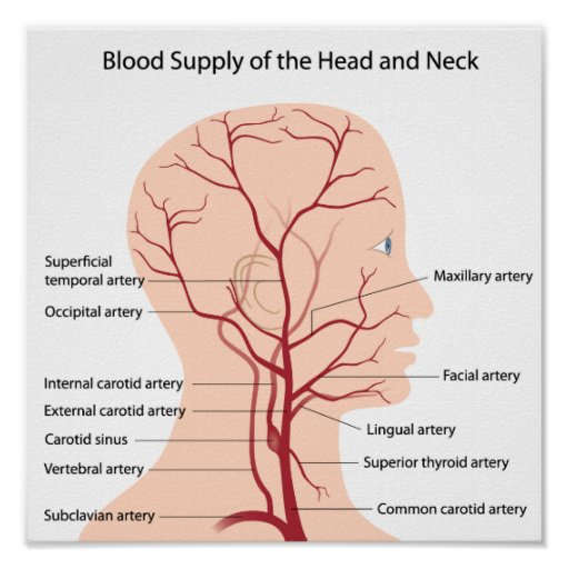 Blood supply of head and neck pdf file