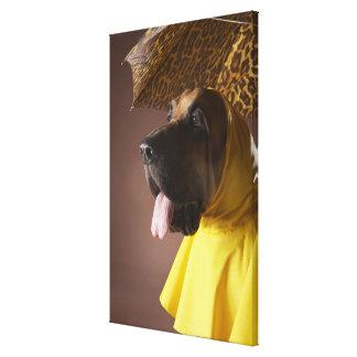 Bloodhound dog. canvas print