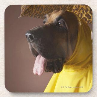 Bloodhound dog. coaster