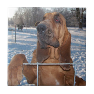 Bloodhound Face Tile