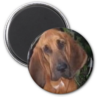 bloodhound magnet