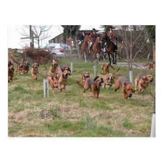 bloodhounds working postcard