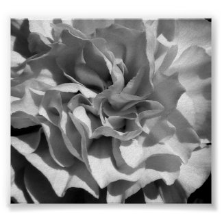 Bloom #4 print