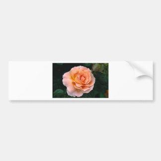 bloom bumper sticker