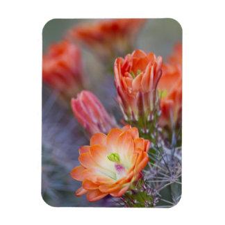 Bloom in Orange Rectangular Photo Magnet