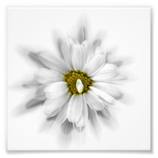 bloom in shades of white art photo