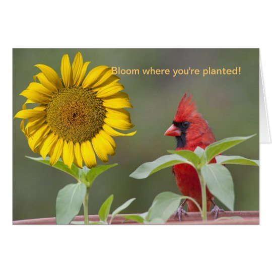 Bloom where you're planted! card
