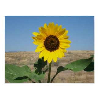 Bloom Where You're Planted - Prairie Flower Print