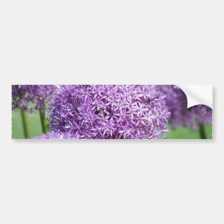 Blooming Allium Flowers  Bumper Stickers