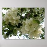 Blooming Apple Tree Print