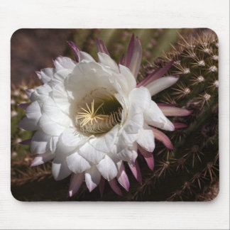 Blooming Argentine Cactus Mousepad