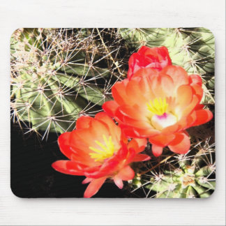 Blooming Cactus at Night Mouse Pad