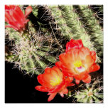 Blooming Cactus at Night Poster