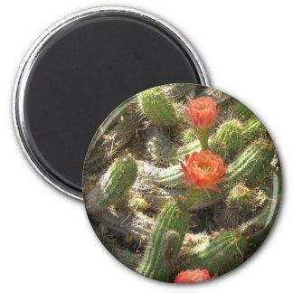 Blooming Cactus Trio 6 Cm Round Magnet
