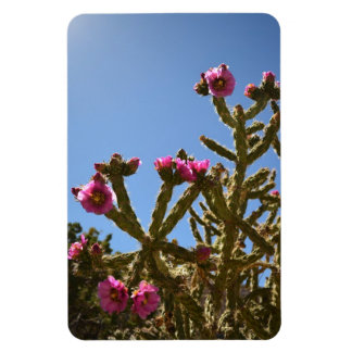 Blooming Cholla Cactus Flowers magnet