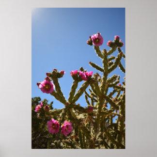 Blooming Cholla Cactus Flowers poster