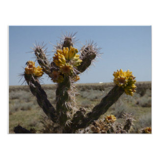 Blooming Choyo Cactus in Southern Colorado Poster