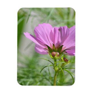 Blooming Cosmos Flowers Vinyl Magnet