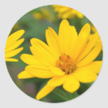 Blooming False Sunflowers Round Stickers