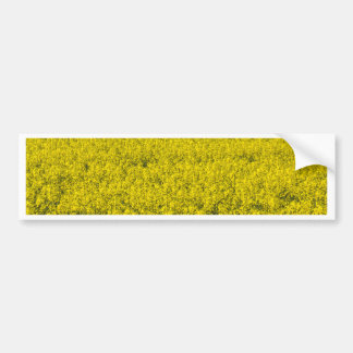 blooming field of rapeseed bumper sticker