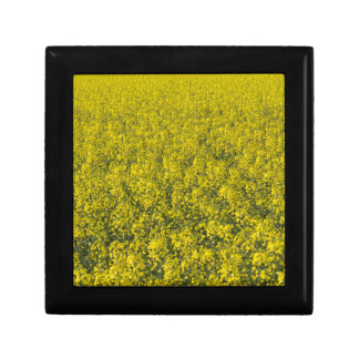 blooming field of rapeseed gift box