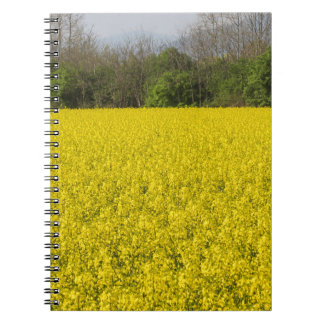 blooming field of rapeseed notebook