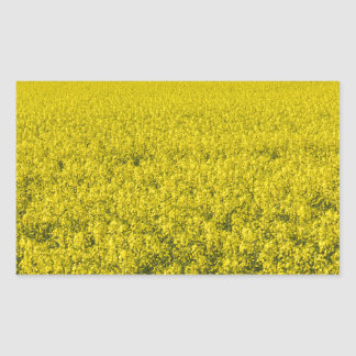 blooming field of rapeseed rectangular sticker
