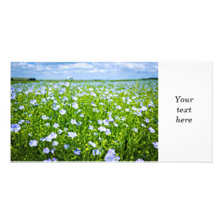 Blooming flax field photo greeting card