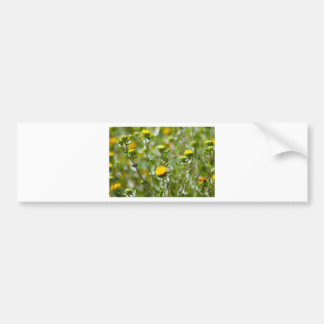Blooming Flowers Bumper Sticker