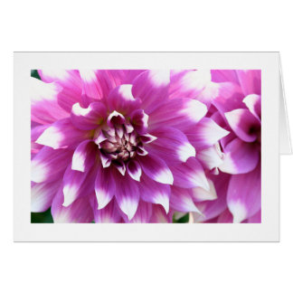 Blooming Fuchsia Dahlias Fine Art Photography Card