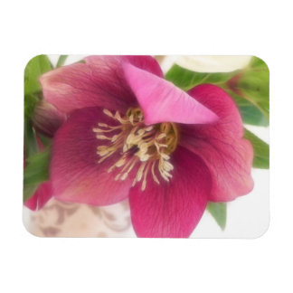 Blooming Hellebore Flower Rectangular Photo Magnet
