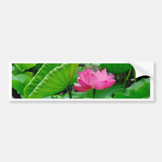 Blooming Lily Bumper Sticker