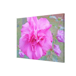 Blooming Pink Fuschia Rose Canvas Print
