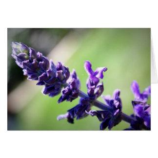Blooming Purple Salvia Greeting Card