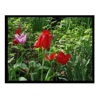 Blooming Red Postcard
