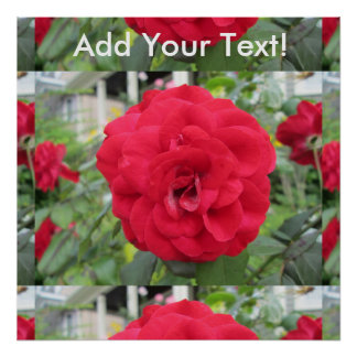Blooming Red Rose Flower Poster