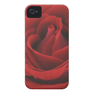 Blooming Red Rose iPhone 4 Case