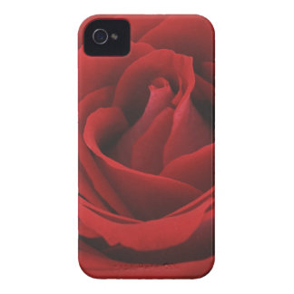 Blooming Red Rose iPhone 4 Cases