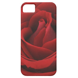 Blooming Red Rose iPhone 5 Cover