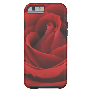 Blooming Red Rose Tough iPhone 6 Case