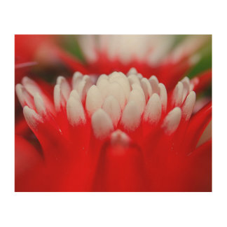 Blooming Red Tropical Exotic Flower Wood Wall Art