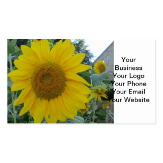 Blooming Sunflower Pack Of Standard Business Cards