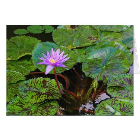 Blooming Water Lily Lotus Flower Card
